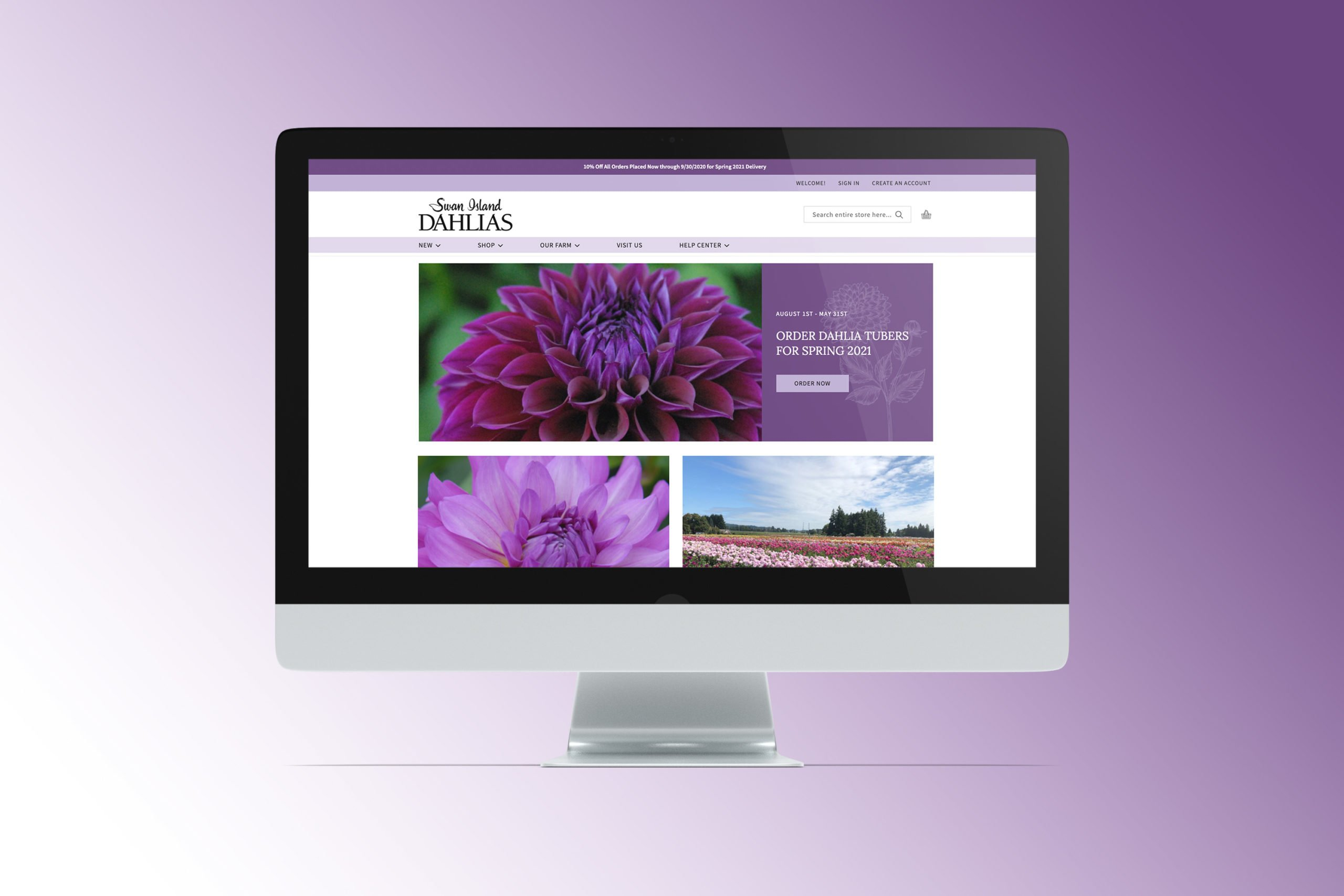 Swan Island Dahlias homepage after redesign on desktop